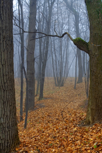 Foggywoods-01-dreamstimefree_3563315
