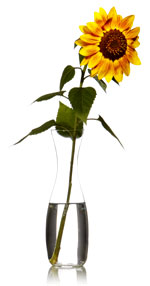SunflowerVaseSml_6578695