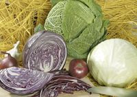 CabbagesCut300_2279801-01